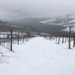 neve-marzo-santa-giustina-vigneti-val-tidone